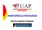 Anatomia introduccion