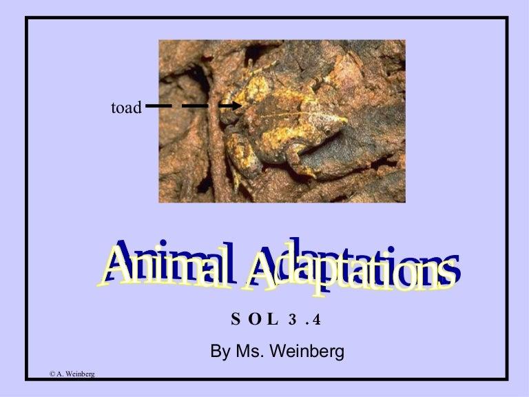 Behavior Animals Behavioral Ada Animals