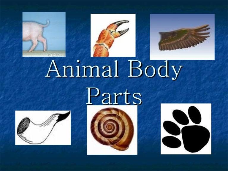 Animal Parts of Body Animal Body-parts