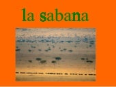 animals sabana