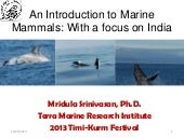 Introduction to Marrine Mammals