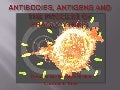 Antibodies, antigens and the process of phagocytosis