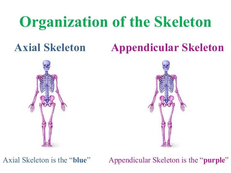 KATMAN SCIENCE – Appendicular Skeleton Worksheet