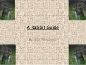 A rabbit guide