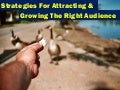 Strategies for Attracting and Growing the Right Audience