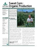 Sweetpotato: Organic Production
