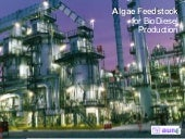 Aum Solutions For Bio Diesel Produc...