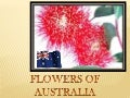 Flowers from Australia