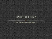 Avicultura. power point
