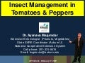 Ayanava tomato pepper pests 2012
