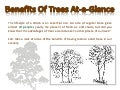 Benefits Of Trees At-a-Glance