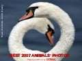 Best 2007 Animals  Photos