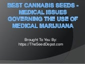 Best Cannabis Seeds - Medical Issue...