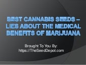 Best Cannabis Seeds – Lies about th...
