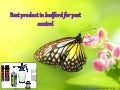 Best product in bedford for pest control