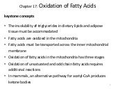 Beta oxidation & protein catabolism