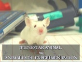 Bienestar Animal En Animales De Lab...