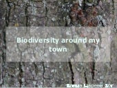 Biodiversity around my town (2)