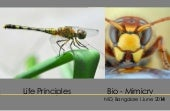 Biomimicry life principle examples