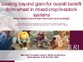 Looking beyond grain for overall benefit from wheat in mixed crop livestock systems