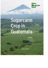 Book sugarcane crop in guatemala