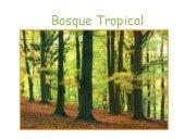 Bosque tropical (2)