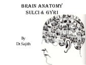 Anatomy of brain sulcus and gyrus -...