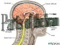 Brain And Its Parts2