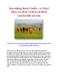 Breeding Beef Cattle - 6 Vital Tips on How to Breed Beef Cattle Effectively