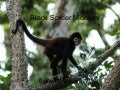 Brendan w black spider monkey