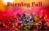 BURNING FALL 2