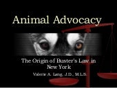 The Origin of Buster's Law in New York