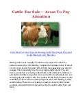 Cattle For Sale – Areas To Pay Attention