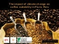 Coffee and Climate Change in Peru