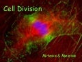 Cell Division Mitosis and Meiosis
