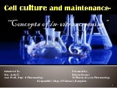 Cell culture and maintenance