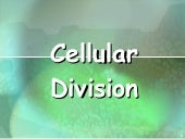 Cell cycle & cell division