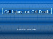 Cell  Injury And  Cell  Death (2006...