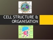 Cell structure & organisation