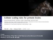 Cellular scaling rules for primate ...