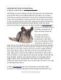 Chinchilla Facts You Should Know