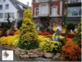 Chrysantemum festival in_germany