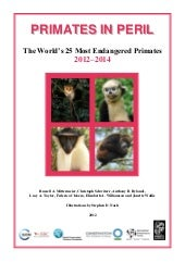 Ci primates in-peril-25-most-endang...