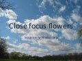 Close focus flowers