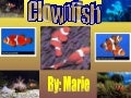 Clownfish,Fixed!!