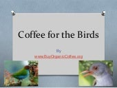 Coffee for the Birds