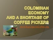 Colombian Economy and a Shortage of Coffee Pickers