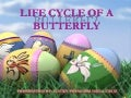 LIFE CYCLE OF A BUTTERFLY ♥