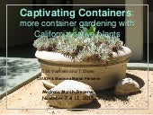Container gardens   2015