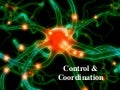 Control and coordination, Brain and its functions